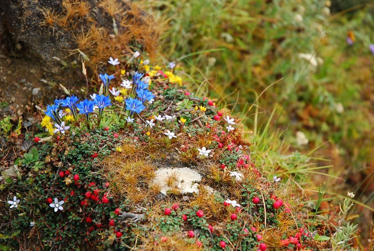 路边的野花 摄影:heidiwd0509